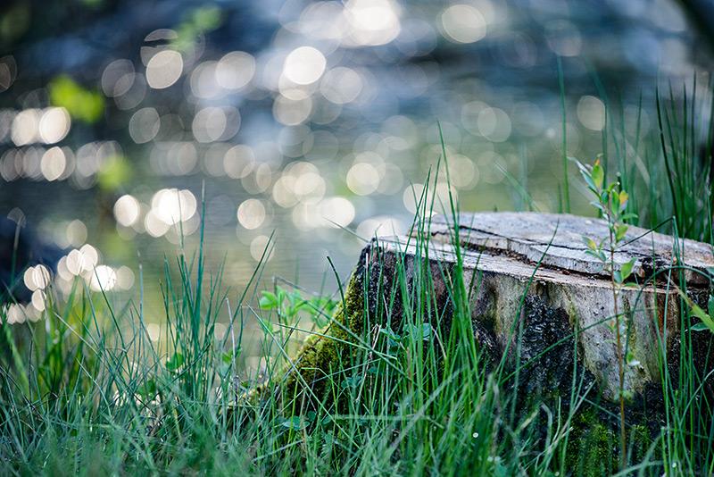 Grünflächen und Umwelt